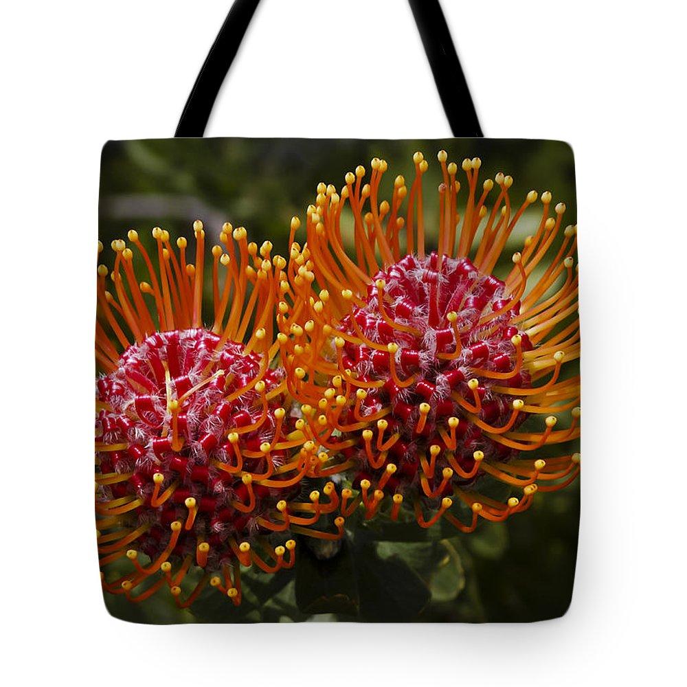 Pincushion Tote Bag featuring the photograph Pincushion Flowers by Dennis Reagan