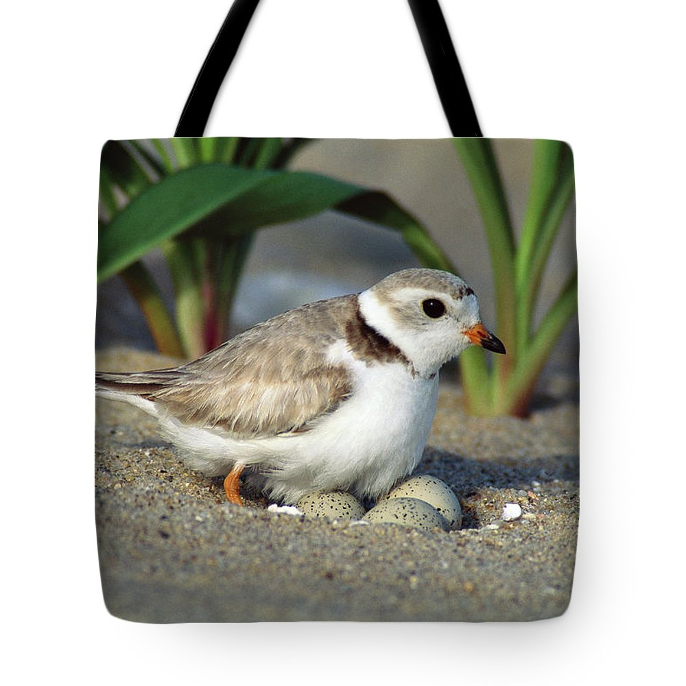 Beach Tote Bag featuring the photograph Piping Plover Charadrius Melodus by Tom Vezo