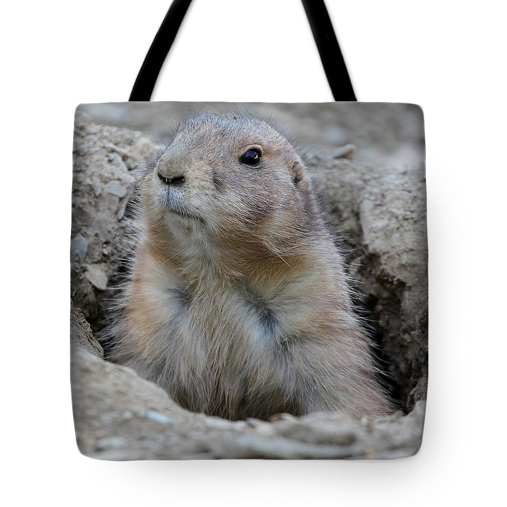 Prarie Tote Bag featuring the photograph Prarie Dog by Ken Keener