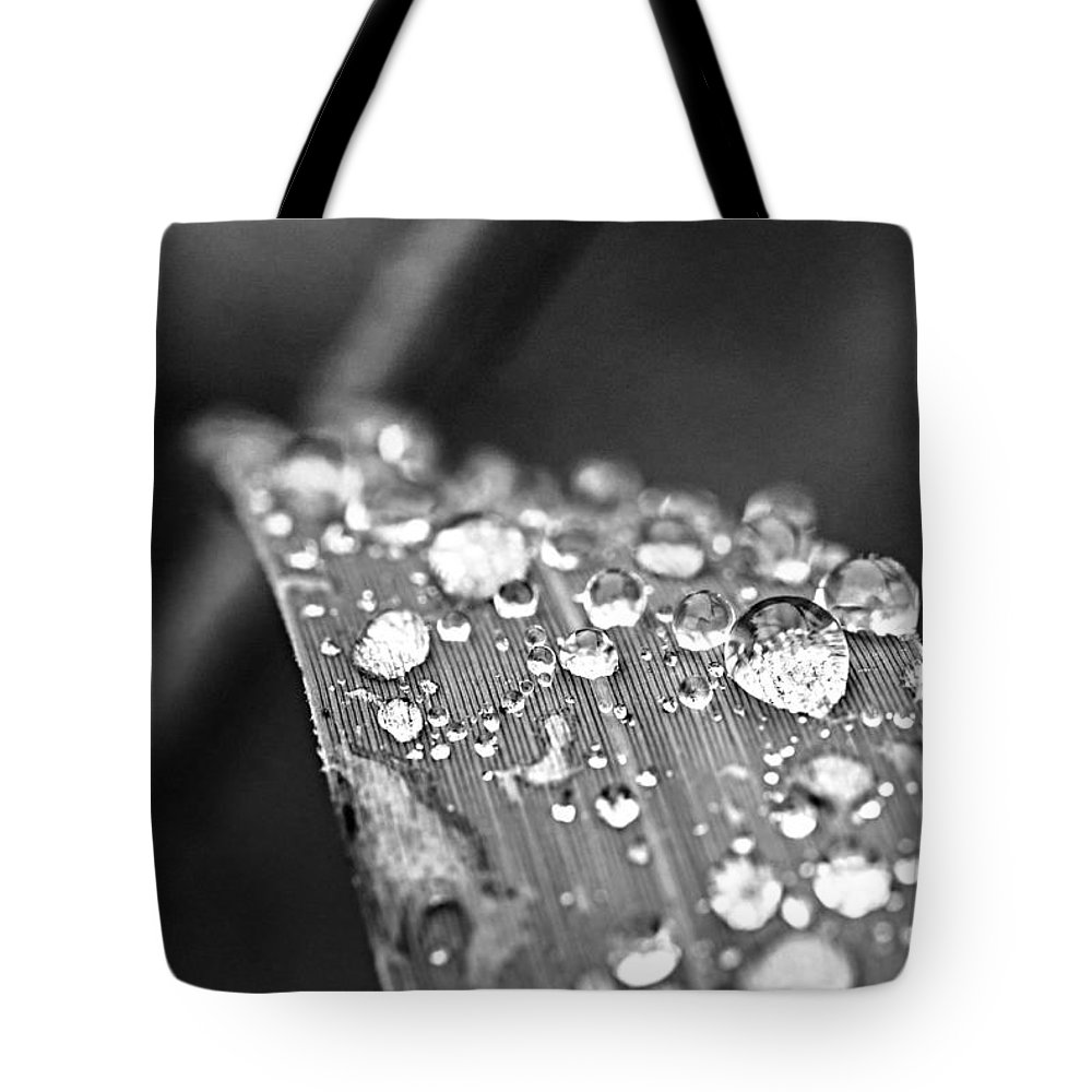 Grass Tote Bag featuring the photograph Raindrops On Grass Blade by Elena Elisseeva
