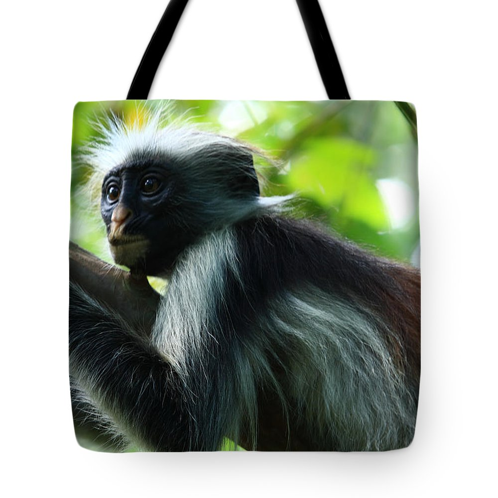 Red Colobus Monkey Tote Bag featuring the photograph Red Colobus Monkey by Aidan Moran