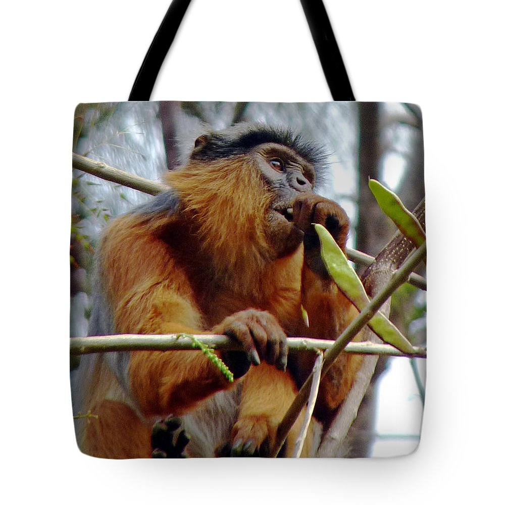 Red Colobus Monkey Tote Bag featuring the photograph Red Colobus Monkey by Tony Murtagh