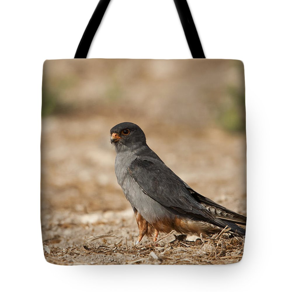 Bird Of Prey Tote Bag featuring the photograph Red Footed Falcon Falco Vespertinus by Eyal Bartov
