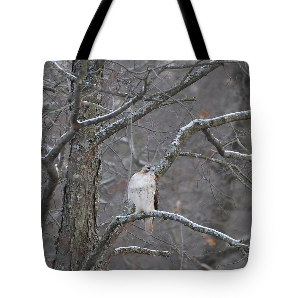 Red-tailed Hawk Tote Bag featuring the photograph Red-tailed Hawk by Scott Angus