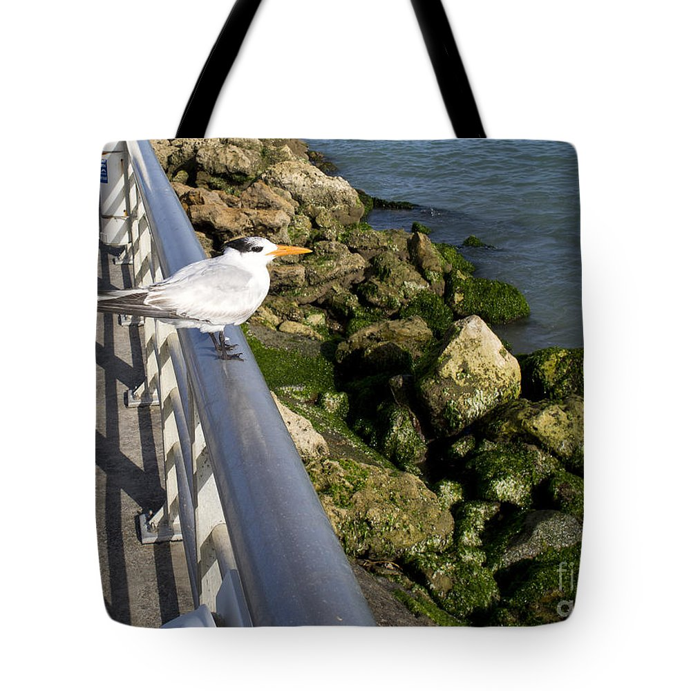Royal Tote Bag featuring the photograph Royal Tern In Florida by Allan Hughes