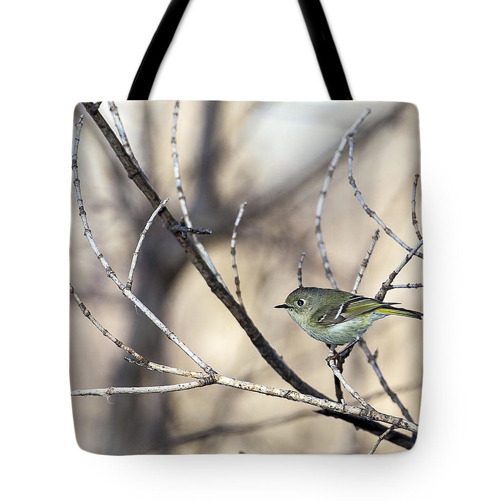 Animal Tote Bag featuring the photograph Ruby-crowned Kinglet by Jack R Perry