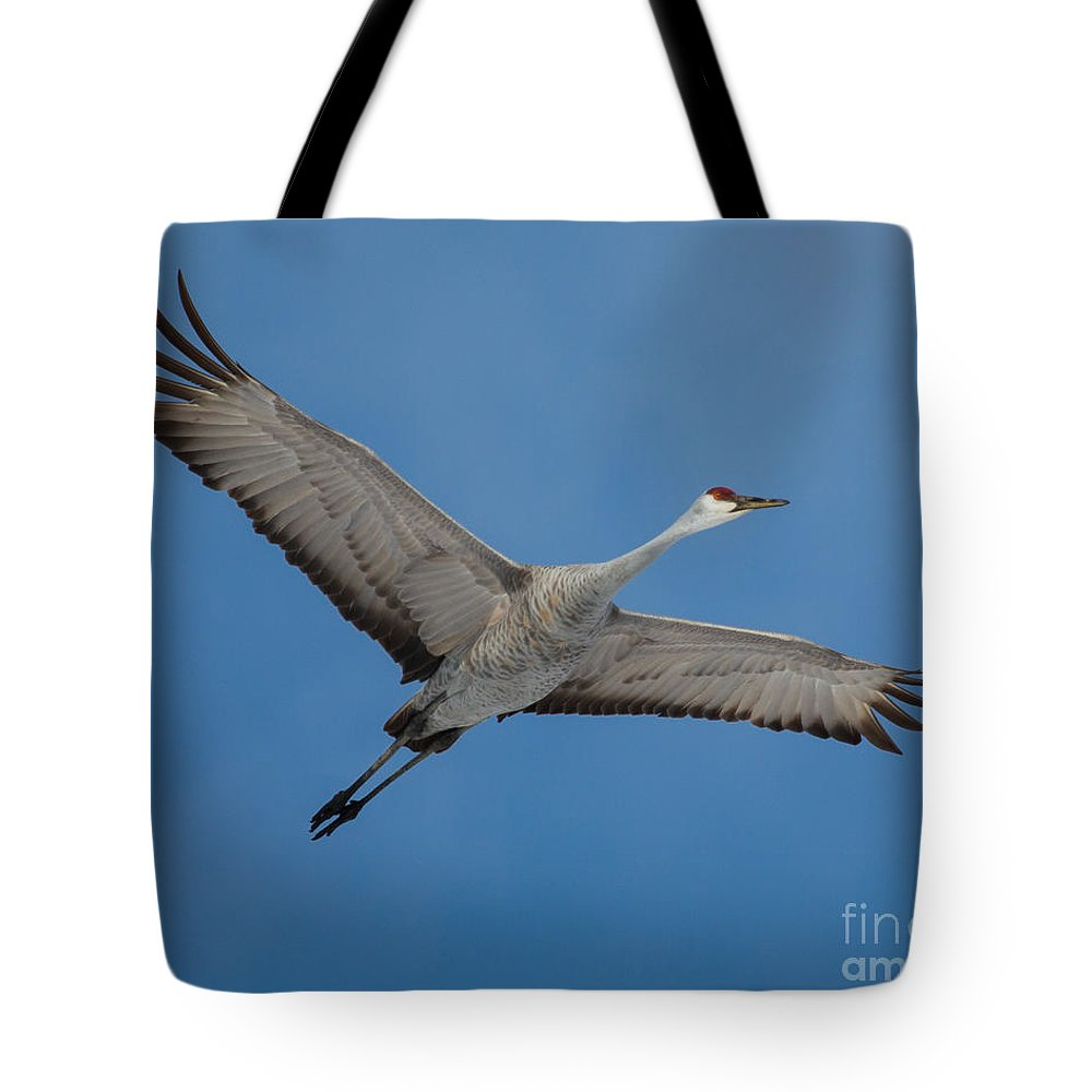 Sandhill Tote Bag featuring the photograph Sandhill Crane by Flying Turkey