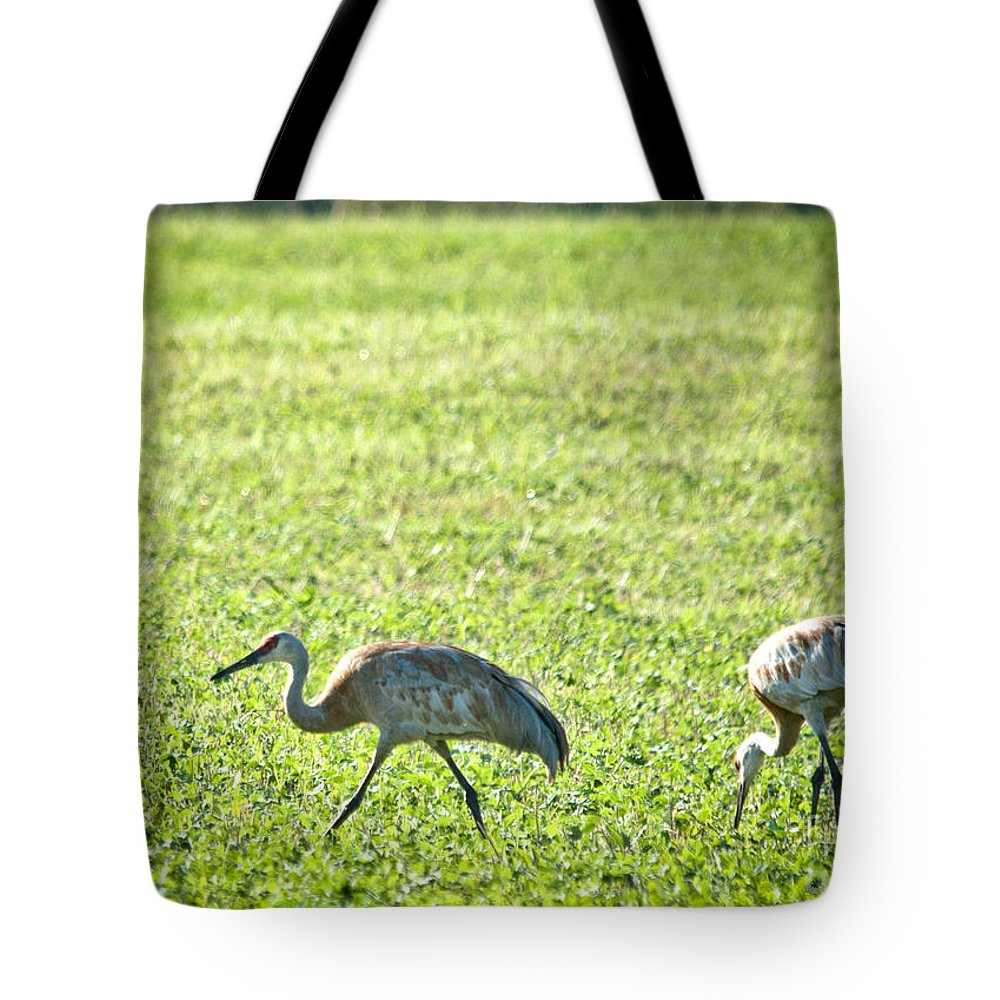 Sandhill Cranes Tote Bag featuring the photograph Sandhill Cranes by Cheryl Baxter