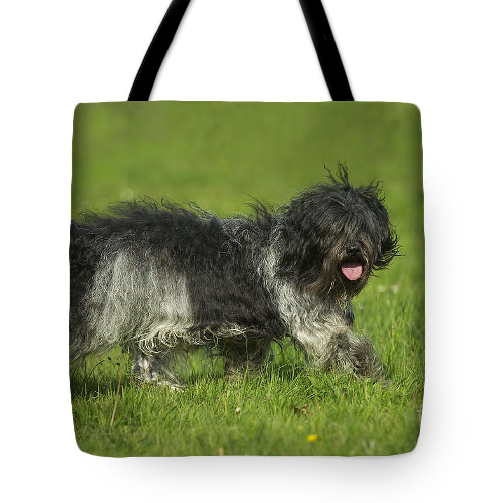 Schapendoes Tote Bag featuring the photograph Schapendoes, Or Dutch Sheepdog by Jean-Michel Labat