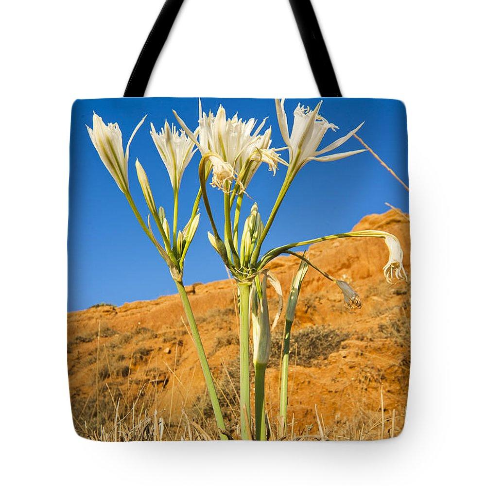 Daffodil Tote Bag featuring the photograph Sea Daffodil by Eyal Bartov