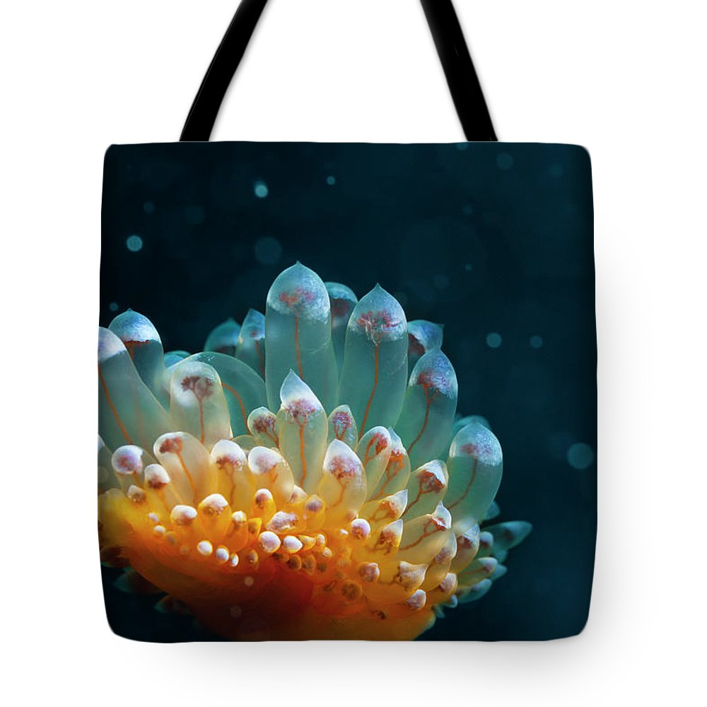 Underwater Tote Bag featuring the photograph Sea Life by Ultramarinfoto