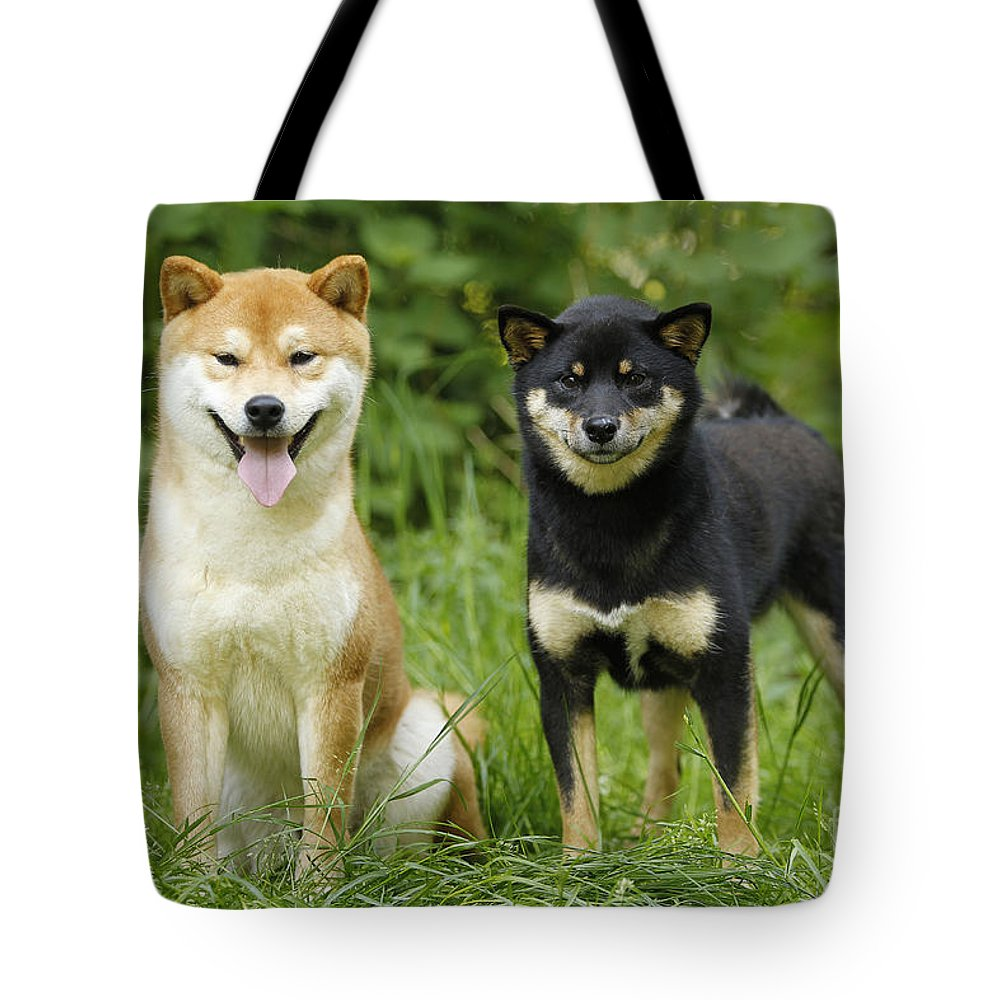 Shiba Inu Tote Bag featuring the photograph Shiba Inu Dogs by Jean-Michel Labat