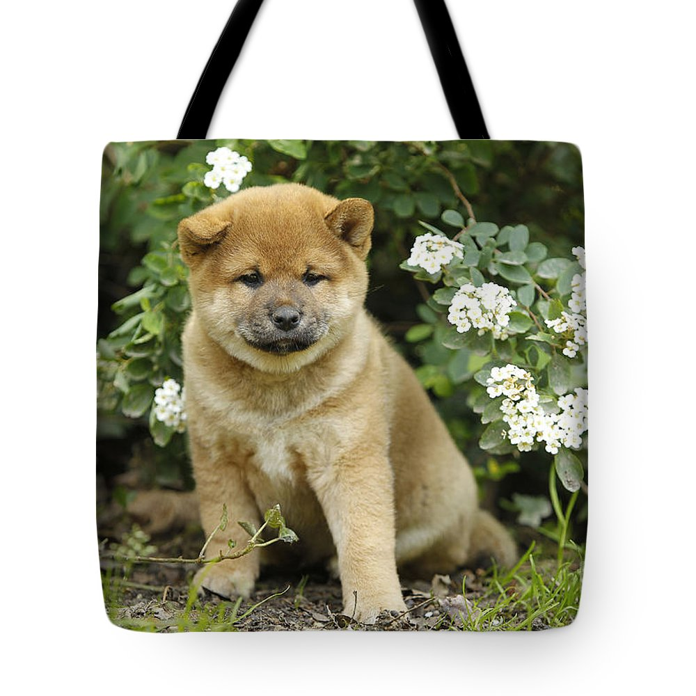 Shiba Inu Tote Bag featuring the photograph Shiba Inu Puppy Dog by Jean-Michel Labat