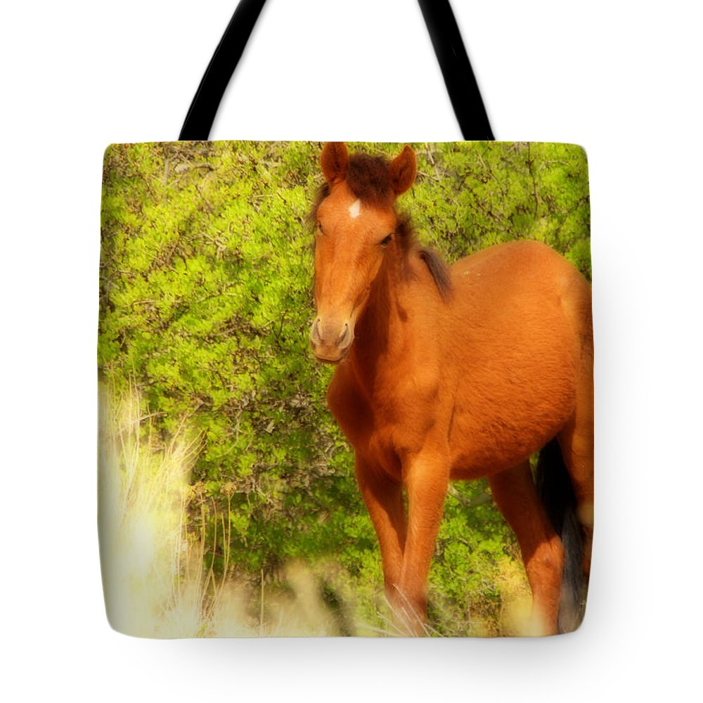 Shy Horse Equine Mustang Young Cold Green Brown White Nature wildlife Desert high Desert Nm new Mexico new Mexico Jeep Tours Wild Free Curious roch Hart Tote Bag featuring the photograph Shy by Roch Hart