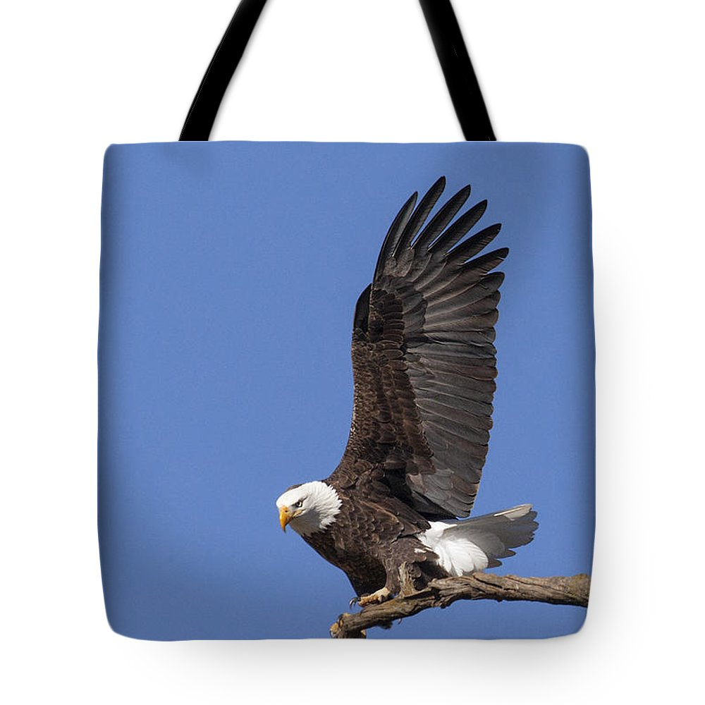 Eagle Tote Bag featuring the photograph Smooth Landing 3 by David Lester