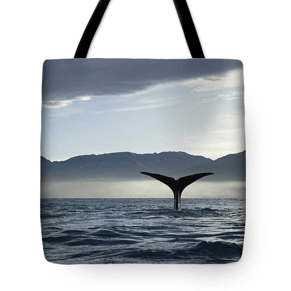 Mp Tote Bag featuring the photograph Sperm Whale Physeter Macrocephalus by Flip Nicklin