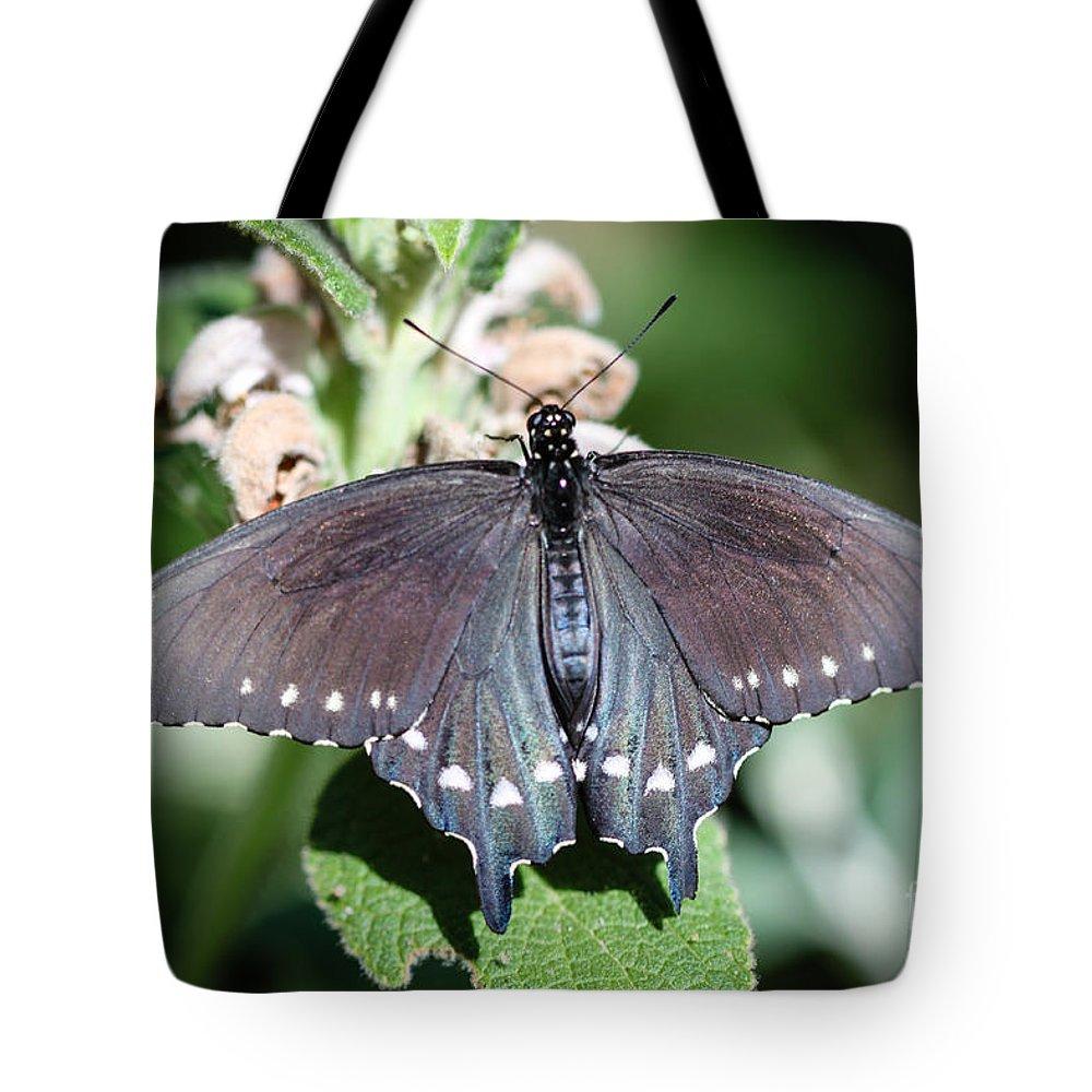 Spicebush Tote Bag featuring the photograph Spicebush Swallowtail Papilio Troilus by Henrik Lehnerer