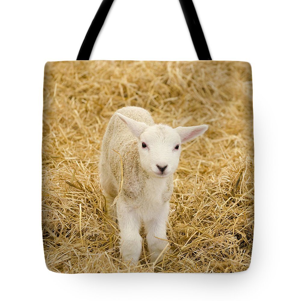 Lamb Tote Bag featuring the photograph Spring Lamb by Steev Stamford