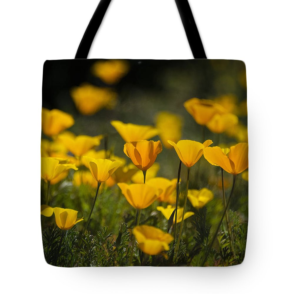 Poppies Tote Bag featuring the photograph Springtime Poppies by Saija Lehtonen