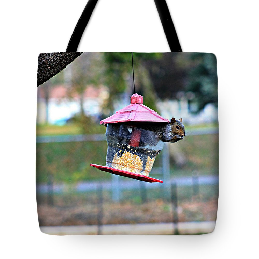 Amanda Stadther Tote Bag featuring the photograph Squirrel by Amanda Stadther