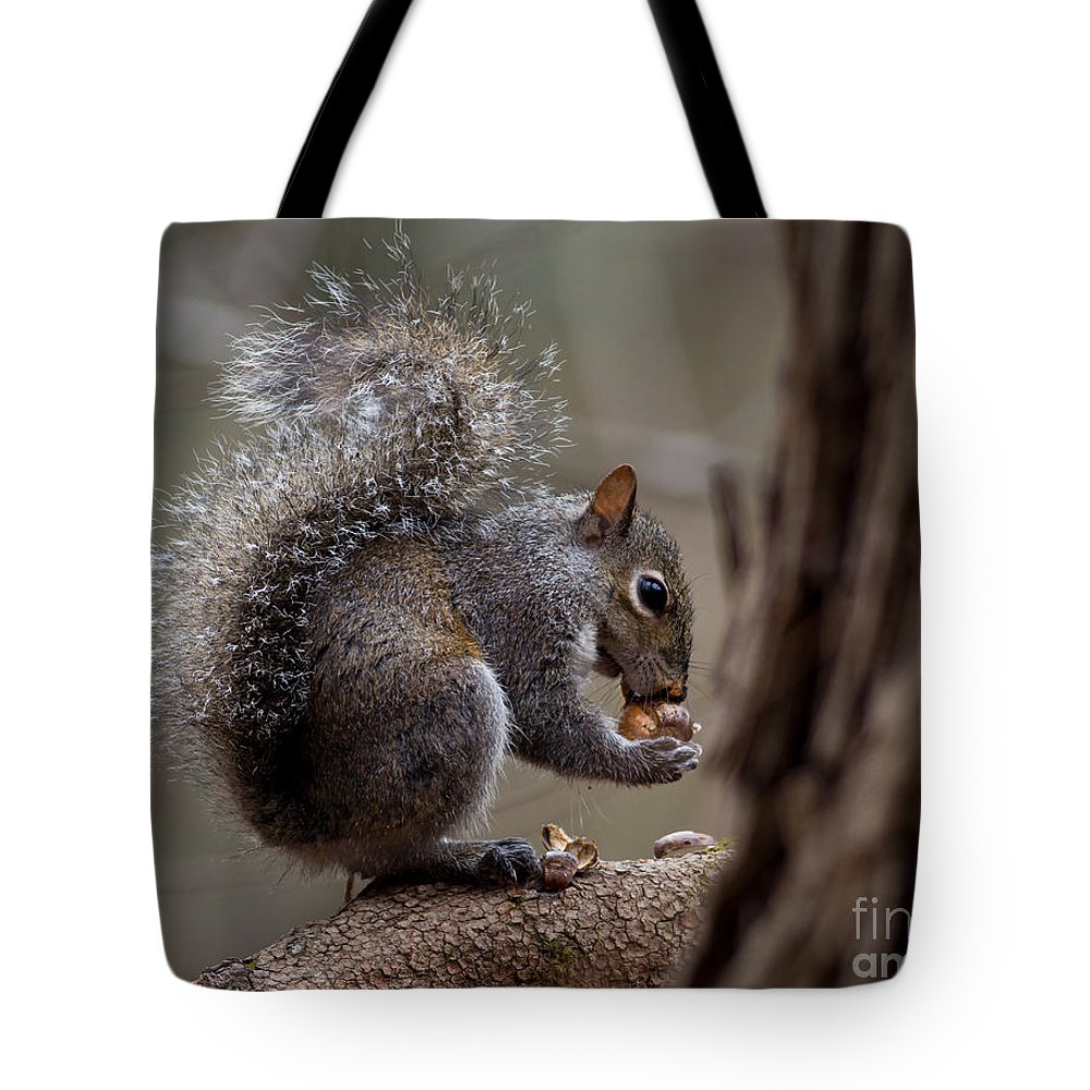 Tote Bag featuring the photograph Squirrel II by Douglas Stucky
