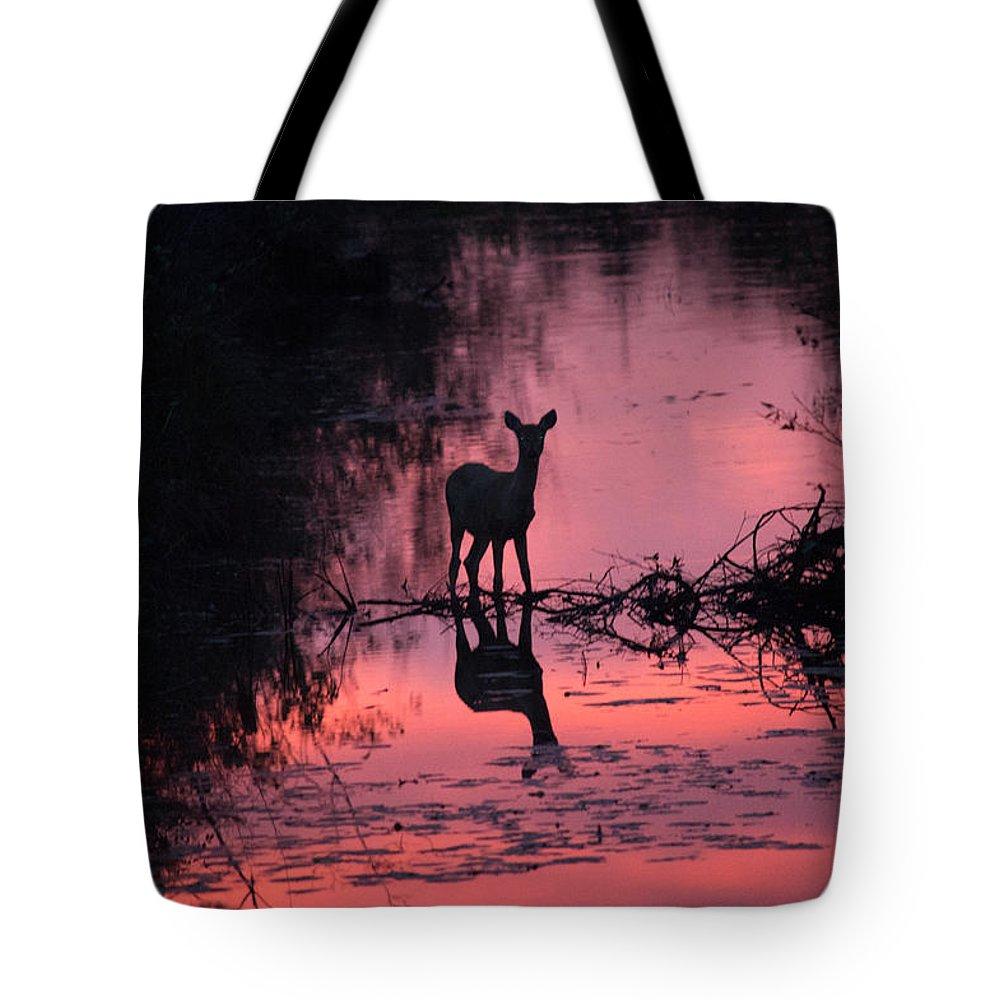 Deer Tote Bag featuring the photograph Standing Still by Linda Kerkau