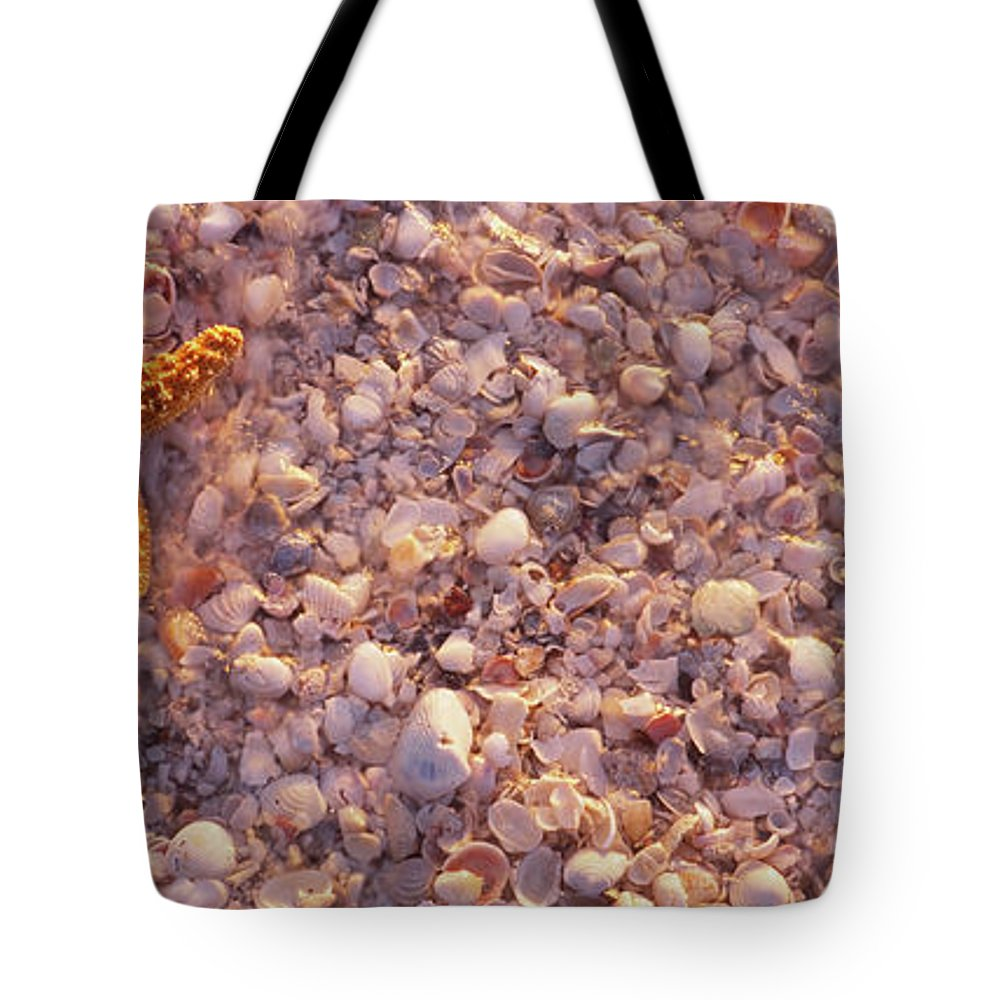 Photography Tote Bag featuring the photograph Starfish On The Beach, Lovers Key State by Animal Images