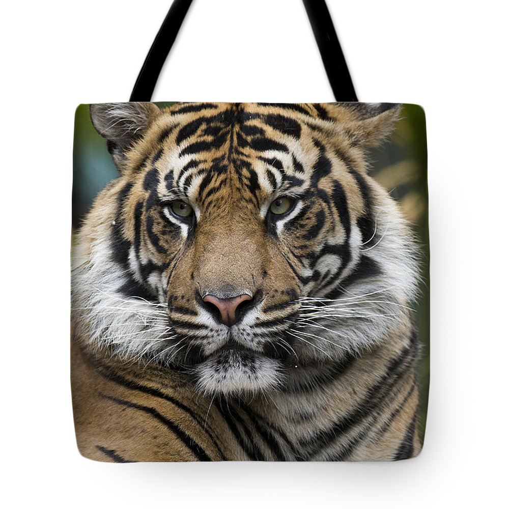 San Diego Zoo Tote Bag featuring the photograph Sumatran Tiger by San Diego Zoo