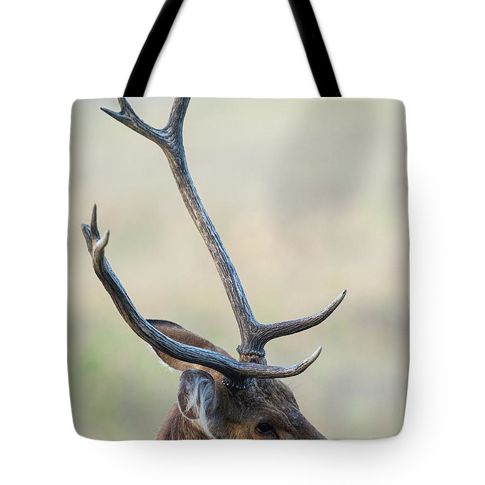 Photography Tote Bag featuring the photograph Swamp Deer Cervus Duvauceli, Kanha by Animal Images