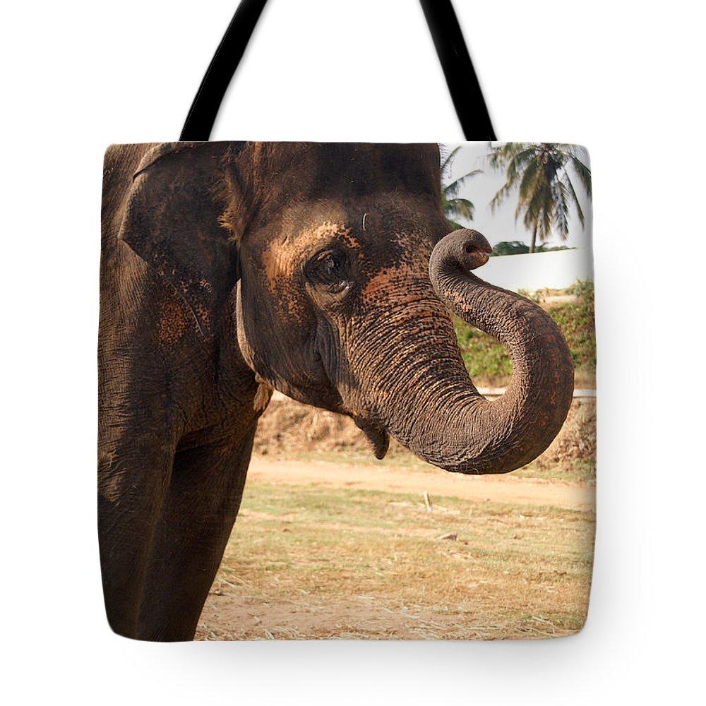 Animal Mamal Elephant Tote Bag featuring the digital art Temple Elephants Maharaja's Palace India Mysore by Carol Ailles