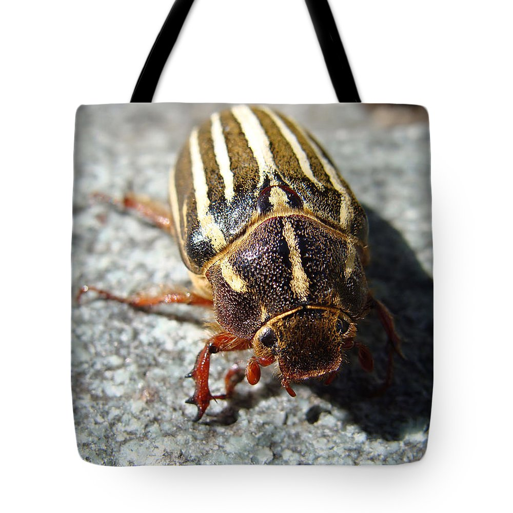 Ten Lined June Beetle Tote Bag featuring the photograph Ten Lined June Beetle by Cheryl Hoyle