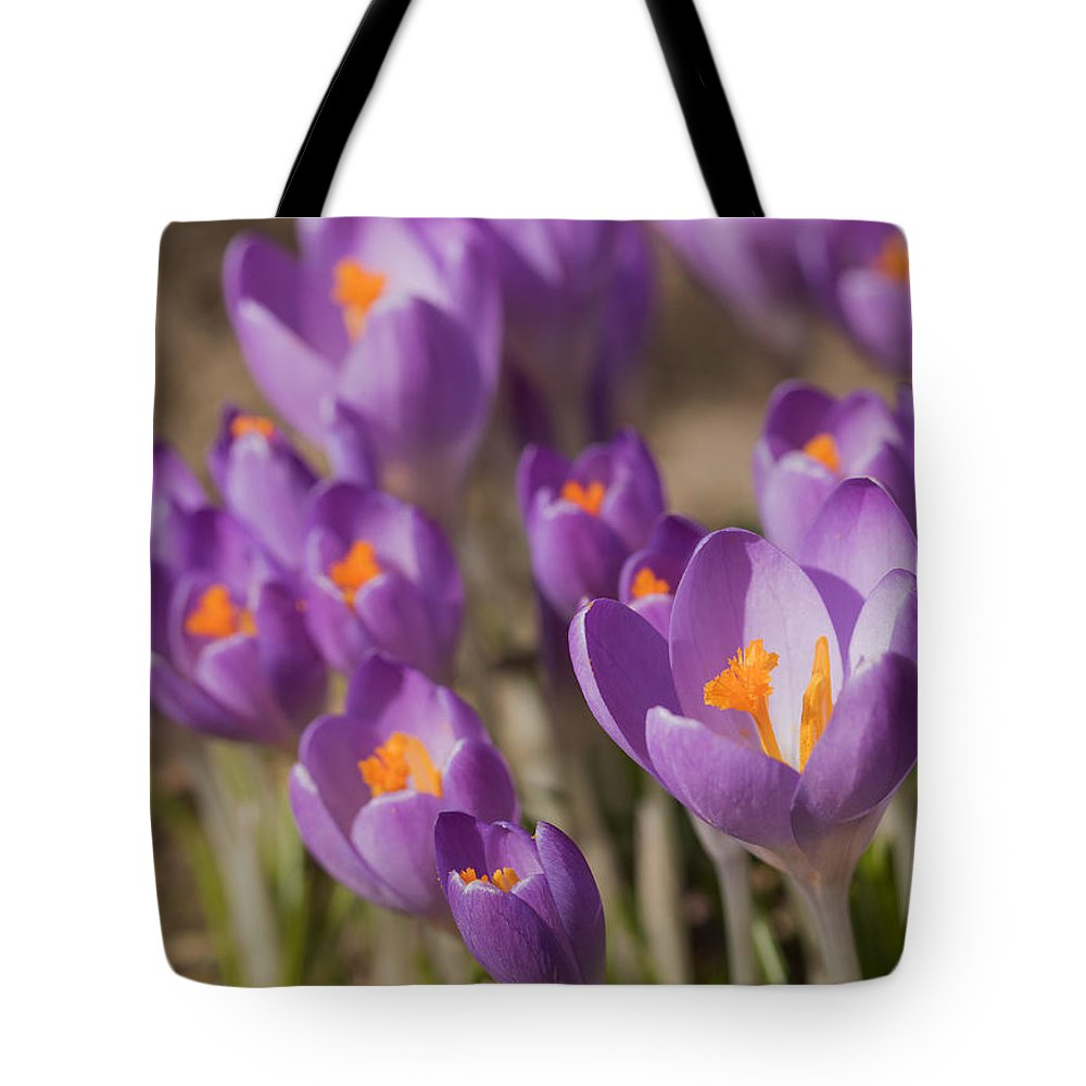 Purple Tote Bag featuring the photograph The Crocus Flowers by Jaroslav Frank