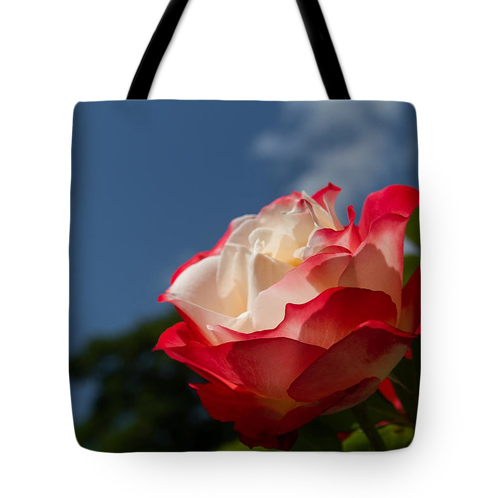 Rose Tote Bag featuring the photograph The Rose by Andreas Levi
