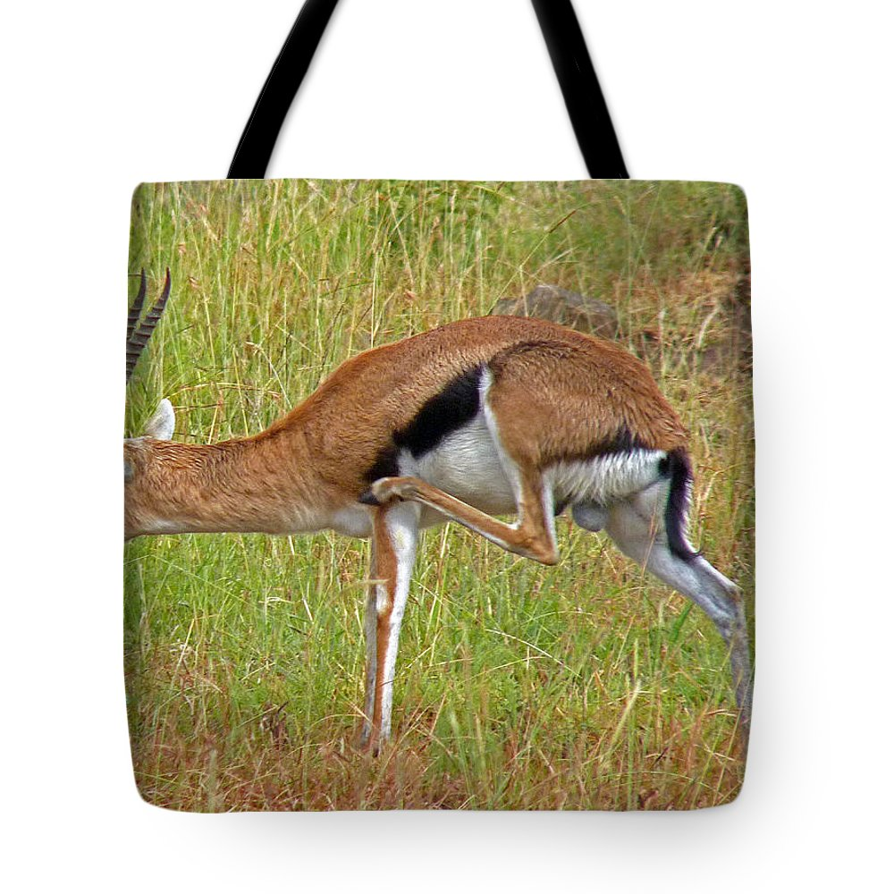 Gazelle Tote Bag featuring the photograph Thomson's Gazelle by Tony Murtagh