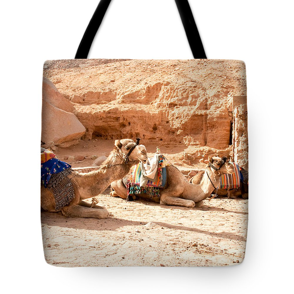 Arab Tote Bag featuring the photograph Three Camels by Roy Pedersen