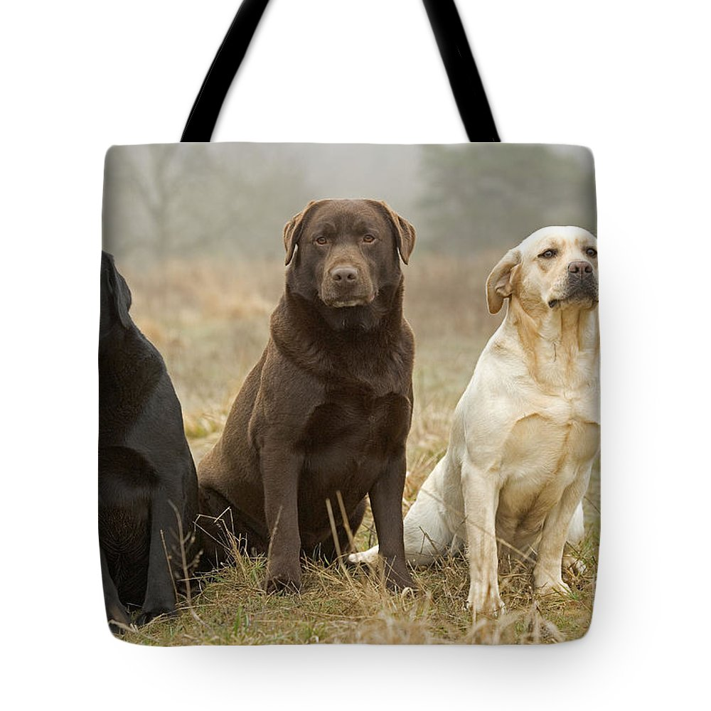 Labrador Retriever Tote Bag featuring the photograph Three Kinds Of Labradors by Jean-Michel Labat