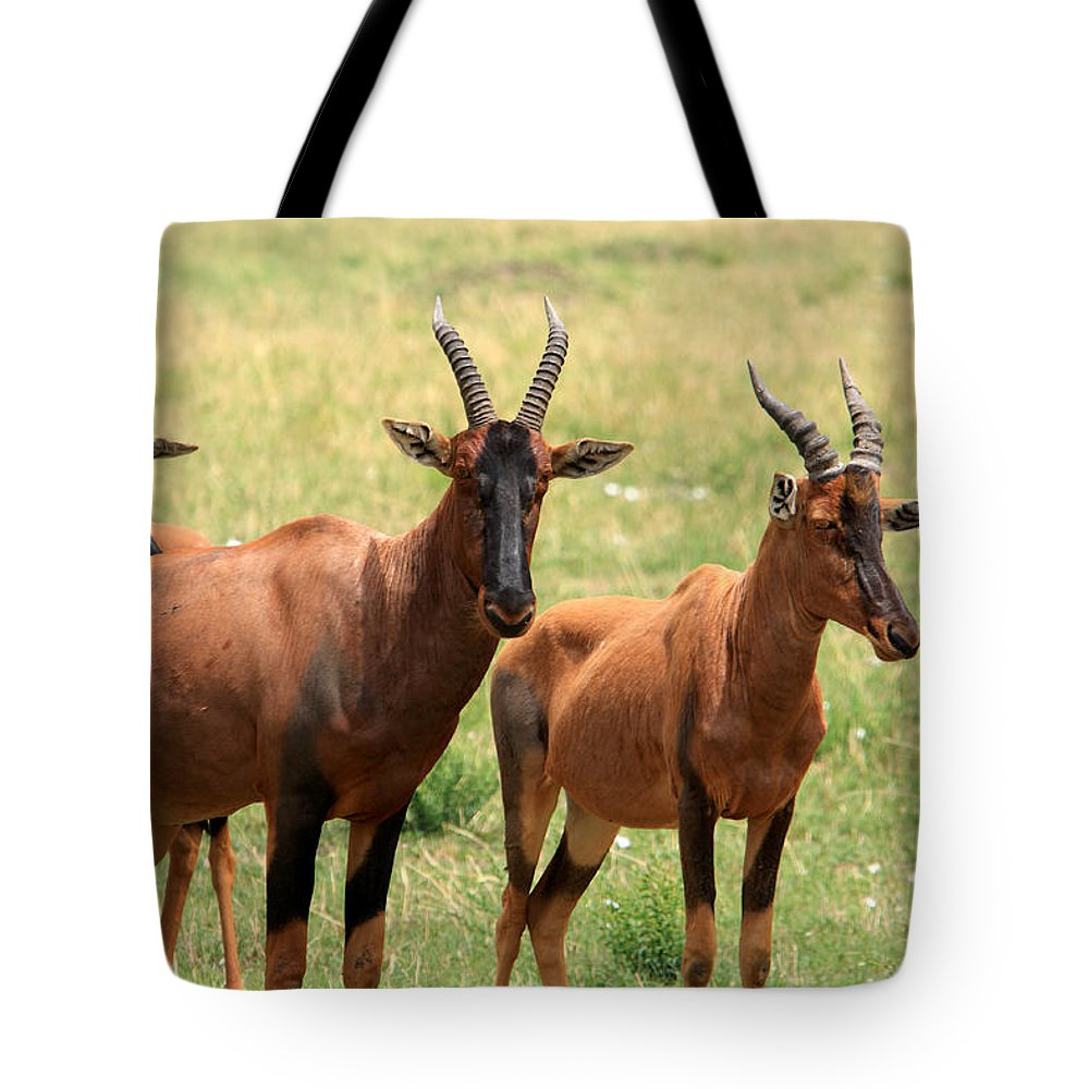 Africa Tote Bag featuring the photograph Topi Antelope by Aidan Moran