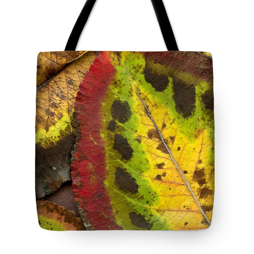 Leaf Tote Bag featuring the photograph Turning Leaves by Stephen Anderson
