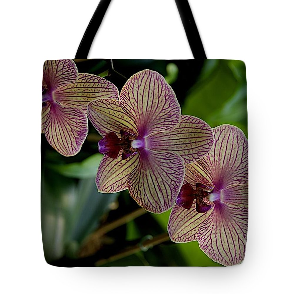 Flowers Tote Bag featuring the photograph Variegated by Joseph Yarbrough