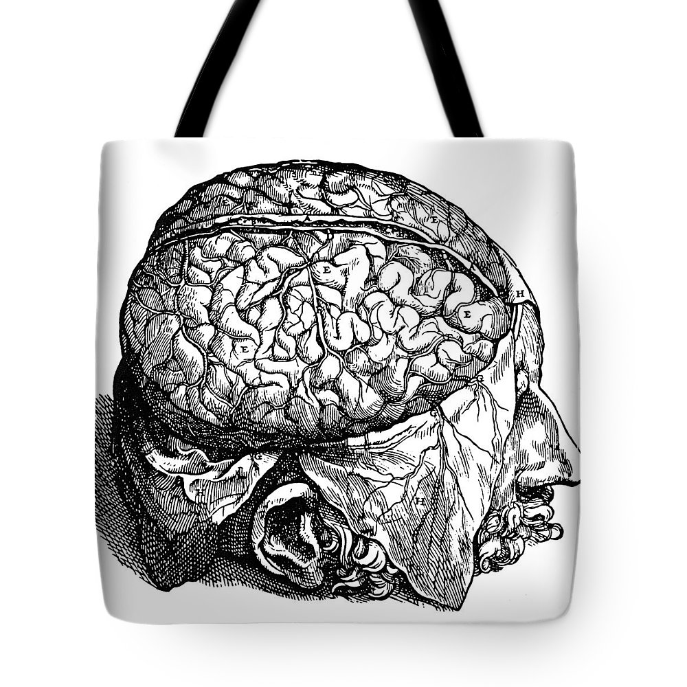 1543 Tote Bag featuring the photograph Vesalius: Brain, 1543 by Granger