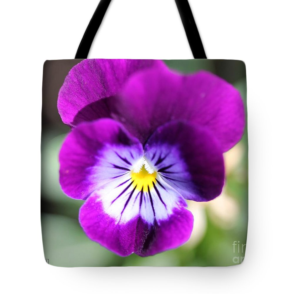 Mccombie Tote Bag featuring the photograph Viola Named Sorbet Plum Velvet Jump-up by J McCombie
