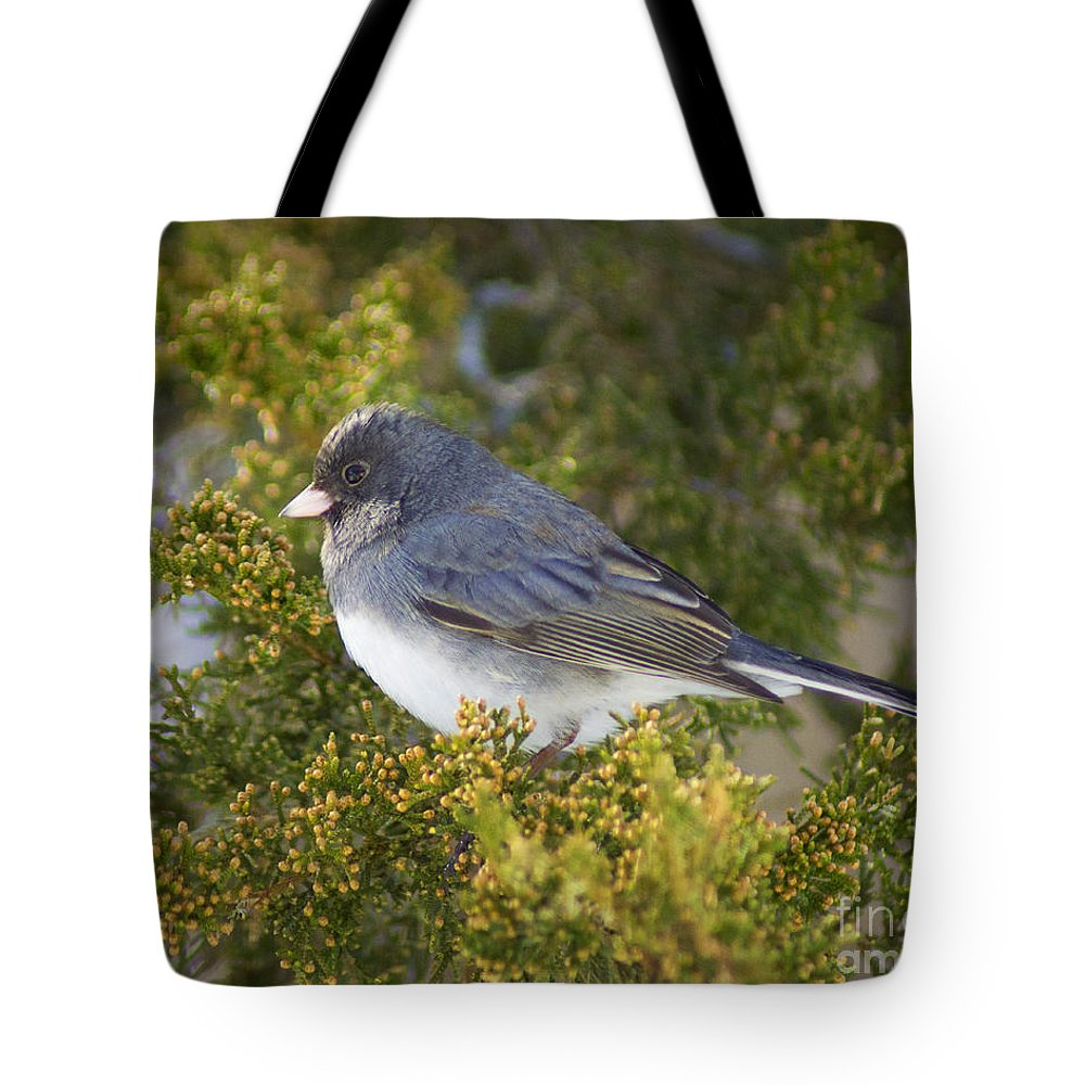 Junco Tote Bag featuring the photograph Waiting Out Winter by Joe Geraci