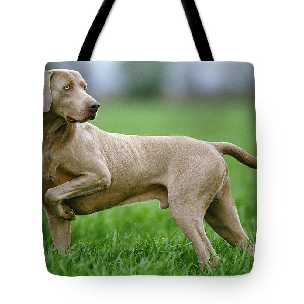 Weimaraner Tote Bag featuring the photograph Weimaraner Dog by Jean-Michel Labat