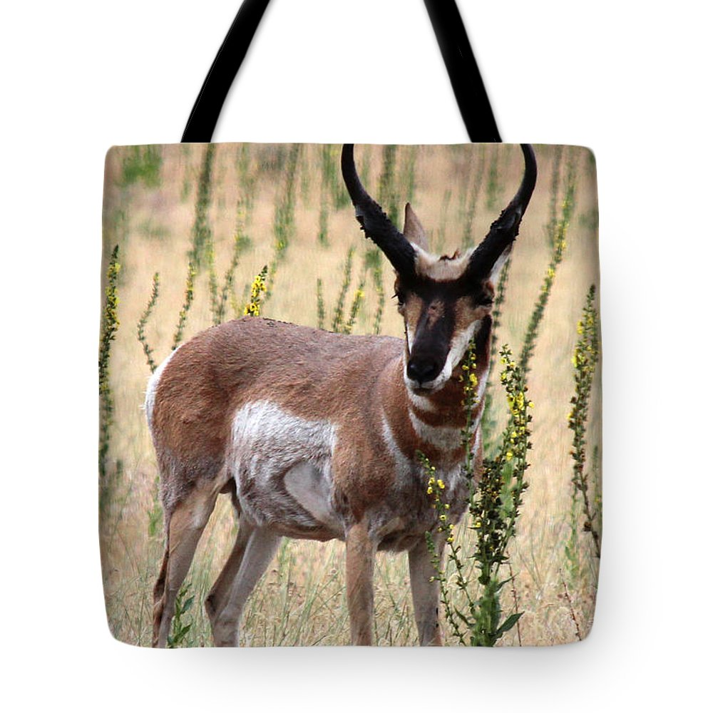 Utah Tote Bag featuring the photograph Where The Antelope Play by Jemmy Archer