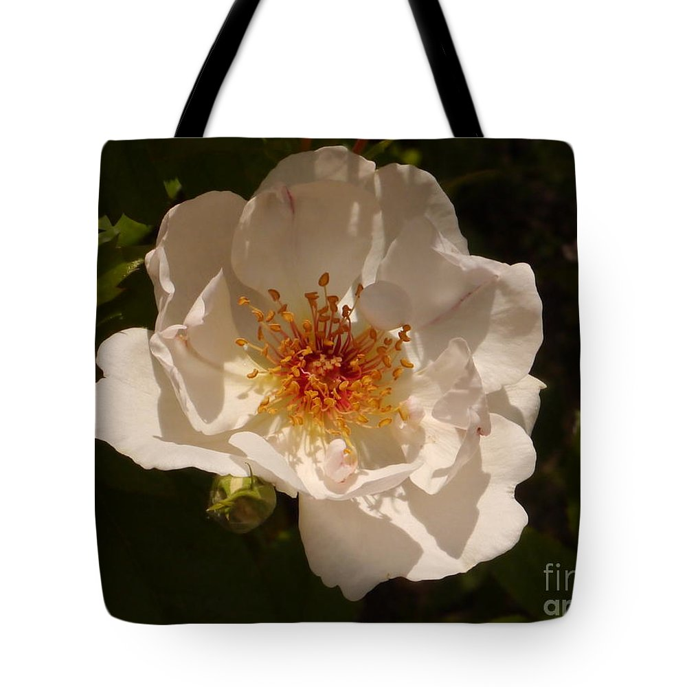 White Rose Tote Bag featuring the photograph White Rose by Christiane Schulze Art And Photography