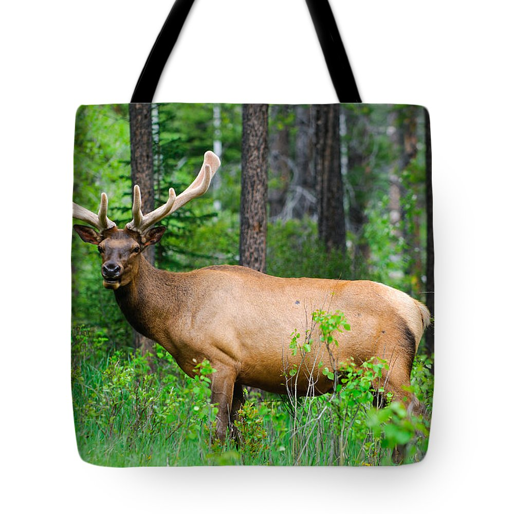 Adult Tote Bag featuring the photograph Wild Bull Elk by Brandon Smith