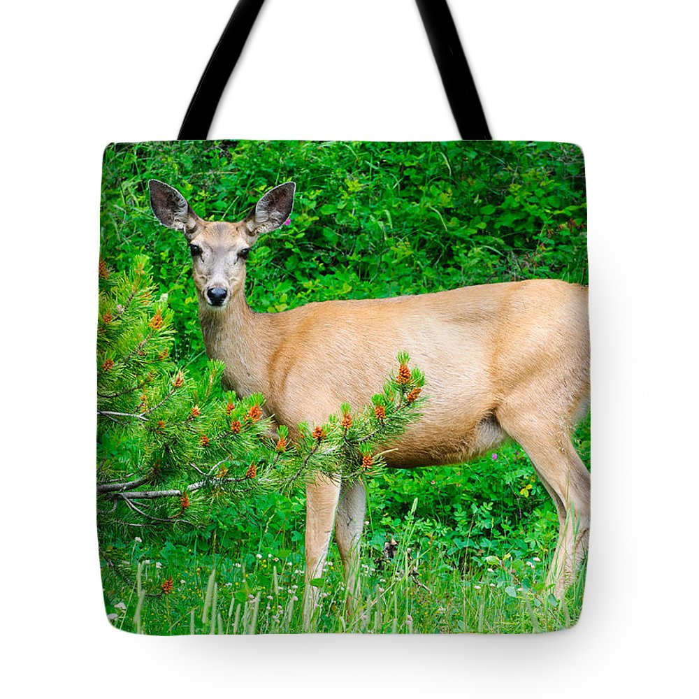 Alberta Tote Bag featuring the photograph Wild Deer by Brandon Smith