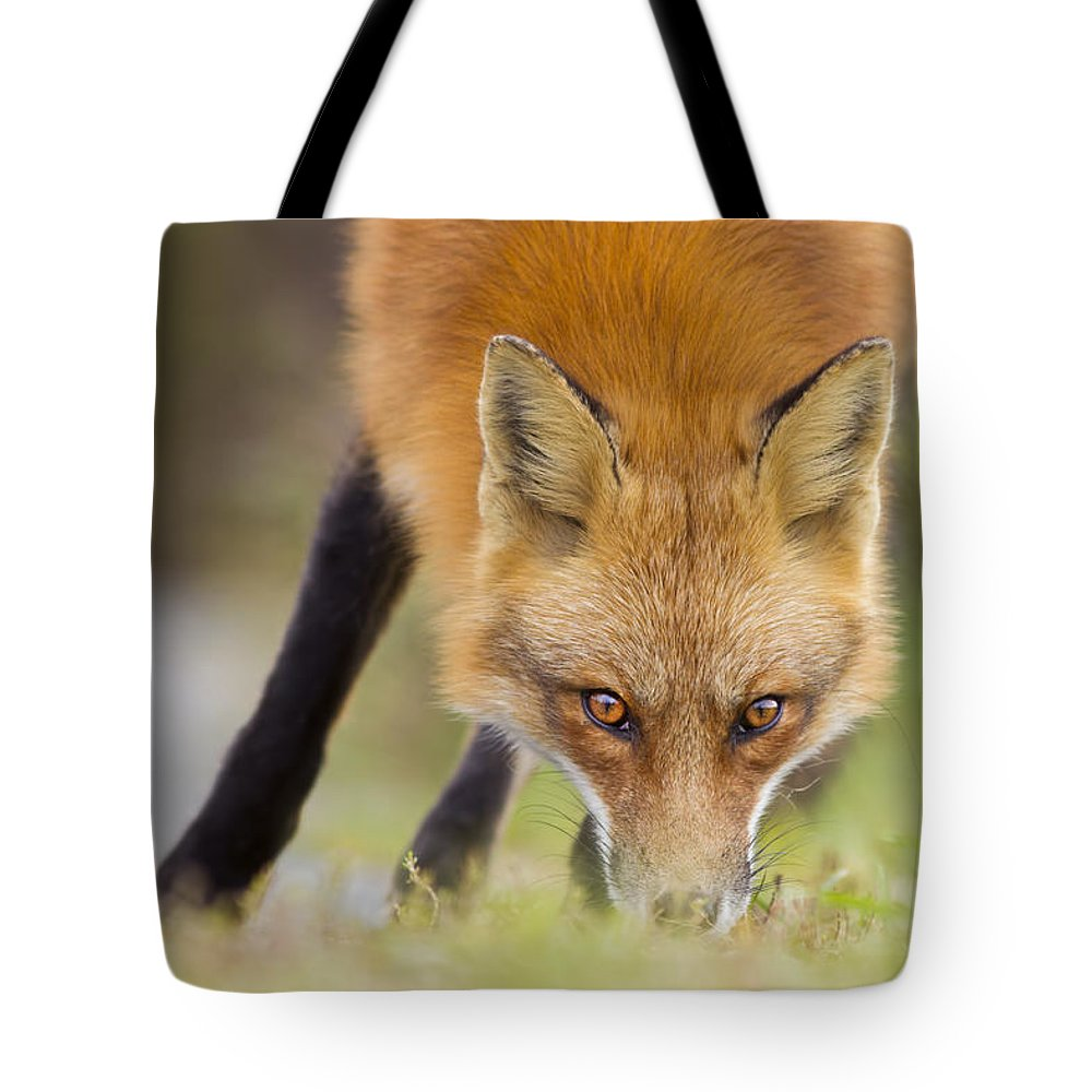 Wild Tote Bag featuring the photograph Wild Eyes by Mircea Costina Photography