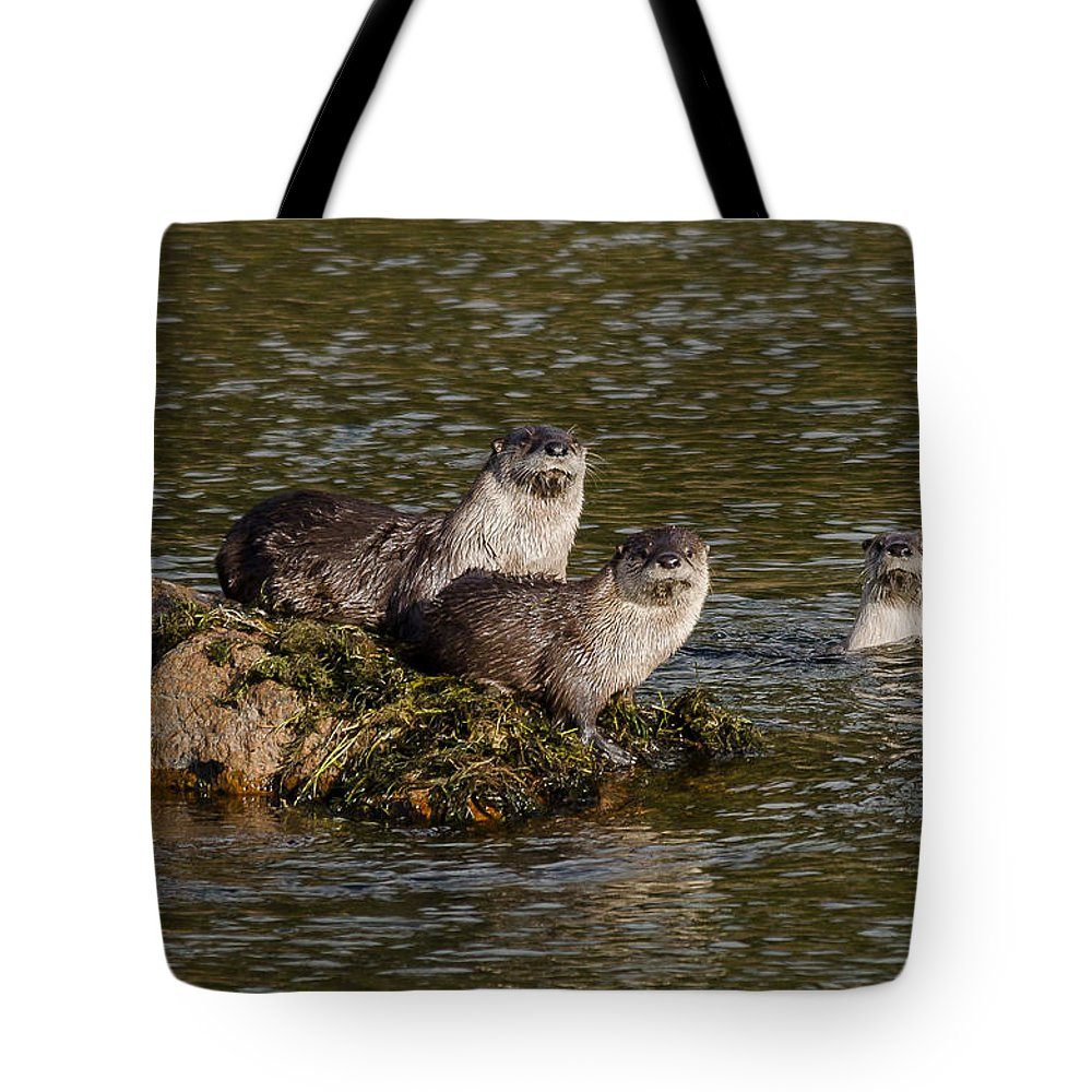Otters Tote Bag featuring the photograph Yellowstone Otters by Yeates Photography