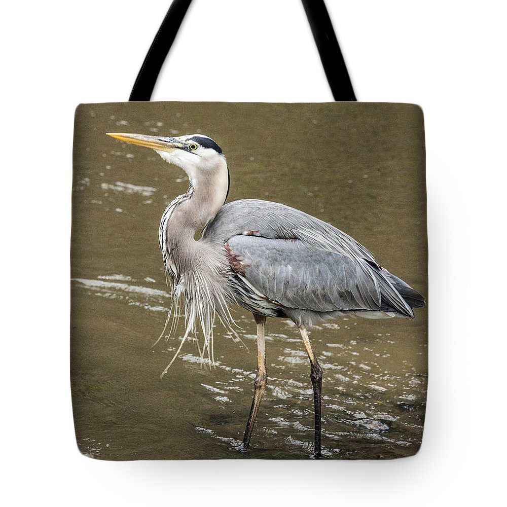 Great Blue Heron Tote Bag featuring the photograph Great Blue Heron by Jeannette Hunt